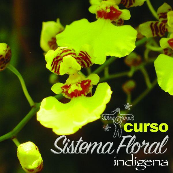 Curso Sistema Floral Indígena